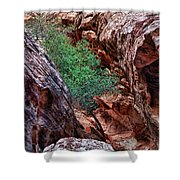 Red And Green Shower Curtain by Rick Berk
