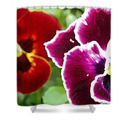Red And Magenta Pansies Shower Curtain