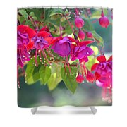 Red And Purple Fuchsias Shower Curtain