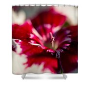 Red And White Dianthus Shower Curtain