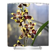 Red And White Orchid  Shower Curtain
