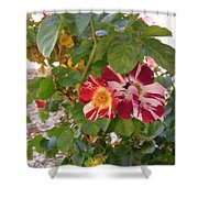 Red And White Roses 3 Shower Curtain