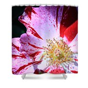 Red And White Speckled Flower Shower Curtain