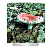 Red And White Wild Mushroom Shower Curtain
