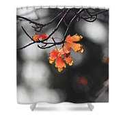 Red And Yellow Fall Leave's Closeup Shower Curtain