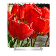 Red Art Spring Tulip Flowers Floral Shower Curtain