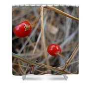 Red Asparagus Berries Shower Curtain