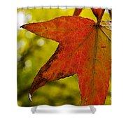 Red Autumn Leaf Shower Curtain