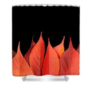 Red Autumn Leaves On Edge Shower Curtain