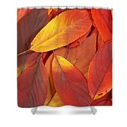Red Autumn Leaves Pile Shower Curtain
