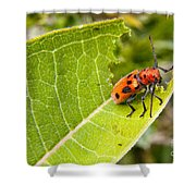 Red Beetle Munching Shower Curtain