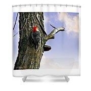 Red-bellied Woodpecker - Male Shower Curtain