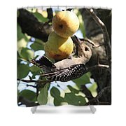 Red-bellied Woodpecker - Yummy Pears Shower Curtain