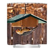 Red-bellied Woodpecker At Lunch Shower Curtain