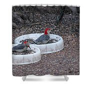Red Bellied Woodpeckers Male And Female Shower Curtain