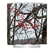 Red Berries White Sky Shower Curtain