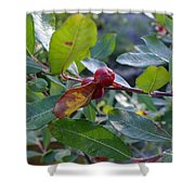 Red Berry  Shower Curtain