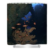 Red Bigeye Fish And Sea Fan In An Shower Curtain by Mathieu Meur