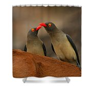 Red-billed Oxpeckers Shower Curtain