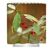 Red Bird Berries Of Fall Shower Curtain