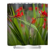 Red Blade Symmetry Shower Curtain