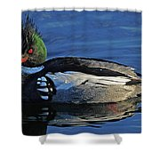 Red Breasted Merganser Shower Curtain