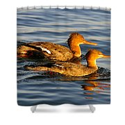 Red Breasted Mergansers Shower Curtain