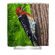 Red Breasted Sapsucker Shower Curtain
