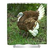 Red Burbon Turkey Shower Curtain