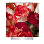 Red Butterfly On Blush Roses Shower Curtain