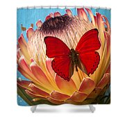 Red Butterfly On Protea Shower Curtain