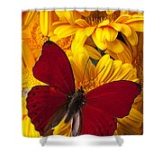 Red Butterfly On Yellow Gerbera Daisies  Shower Curtain