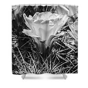 Red Cactus Flower Bw Shower Curtain