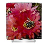Red Cactus Flower With Bumble Bee Shower Curtain