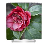 Red Camellia Squared Shower Curtain