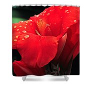 Red Canna With Raindrops Shower Curtain