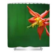 Red Columbine Aquilegia Formosa Shower Curtain