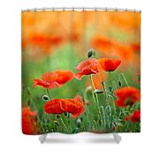 Red Corn Poppy Flowers 03 Shower Curtain by Nailia Schwarz