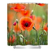 Red Corn Poppy Flowers 05 Shower Curtain