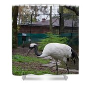Red Crowned Crane Shower Curtain