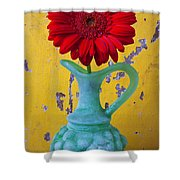 Red Daisy In Grape Vase Shower Curtain