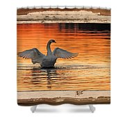 Red Dawn Swan Framed In Old Window Frame Shower Curtain