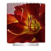 Red Day Lily Shower Curtain