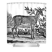 Red Deer Shower Curtain by Granger
