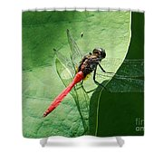 Red Dragonfly          Shower Curtain