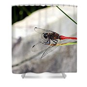 Red Dragonfly 2 Shower Curtain