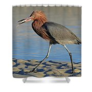 Red Egret With Fish Shower Curtain