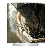Red Eyed Demon Squirrel Shower Curtain