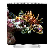 Red Eyed Scorpion Fish Shower Curtain