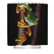 Red-eyed Tree Frog Agalychnis Callidryas Shower Curtain